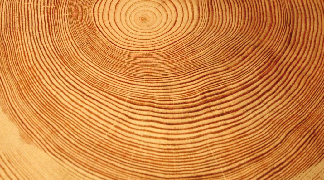 Le bois acteur de la lutte aux changements climatiques for Les bois flottes de sophie