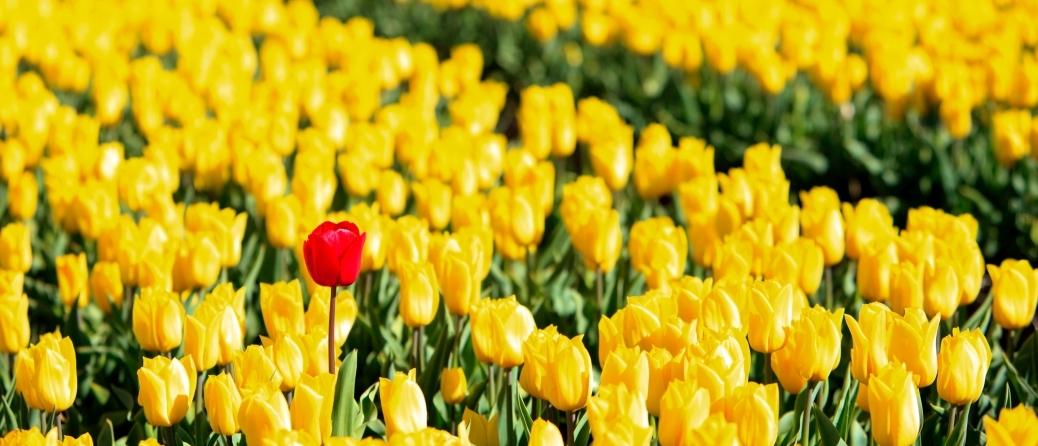 droits d'auteur: depositphotos.com/Ysbrand